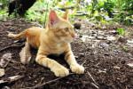Domestic cat In a Natural Habitat