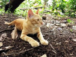 cat in its natural habitat