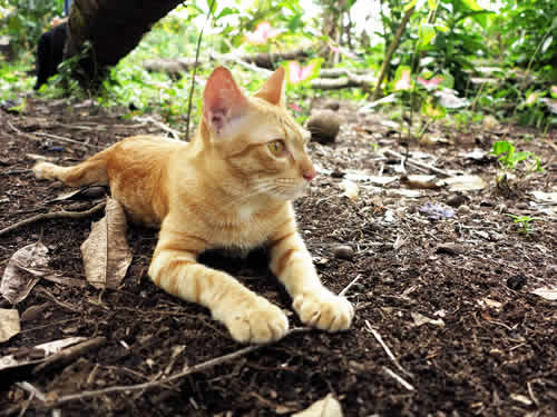 Royalty free image showing a Domestic cat In a Natural Habitat