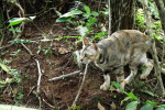 Small domestic cat camouflaged in the woods