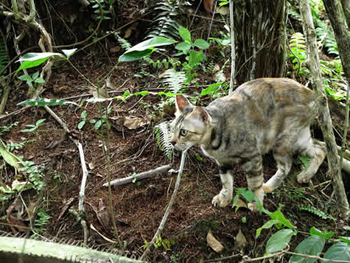 Royalty free image of a small domestic cat camouflaged in the woods