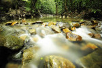 Tropical Rain forest River In Southeast Asia