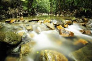 tropical rainforest river southeast asia