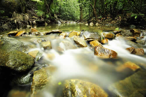 Royalty free image depicting a tropical rain forest river In Southeast Asia
