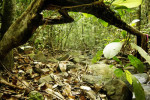 Tropical Rain forest With Shallow Stream