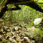 tropical rainforest shallow stream