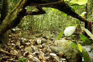 tropical rainforest shallow stream