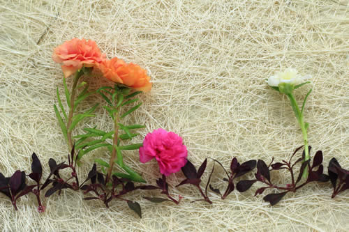 Royalty free image with pink, white and orange flowers against a natural background