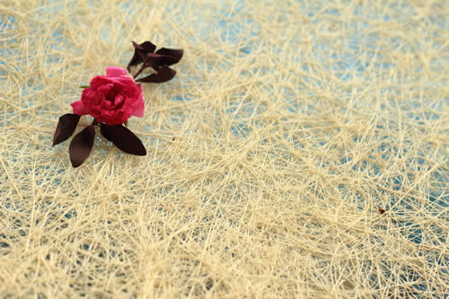 Royalty free image of a Red Flower Against Natural White Blue Background