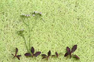 flower_leaves_background_tn