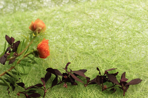 Royalty free image of Orange flowers against a natural green background.