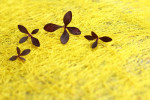 4 Tiny Dark Leaves against a bright Yellow Background
