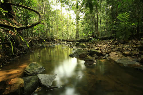 Royalty free image - Calm forest stream in a tropical jungle