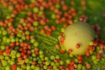 Mix of Green and Red seeds on a green natural Background