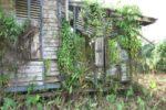 Overgrown, run down shack ruin.