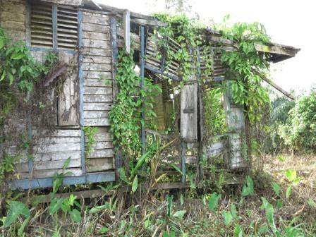 Overgrown run down shack ruin