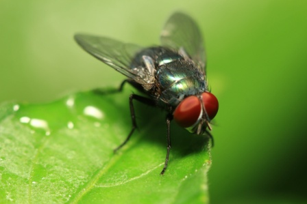 Macro image of a fly on a leaf
